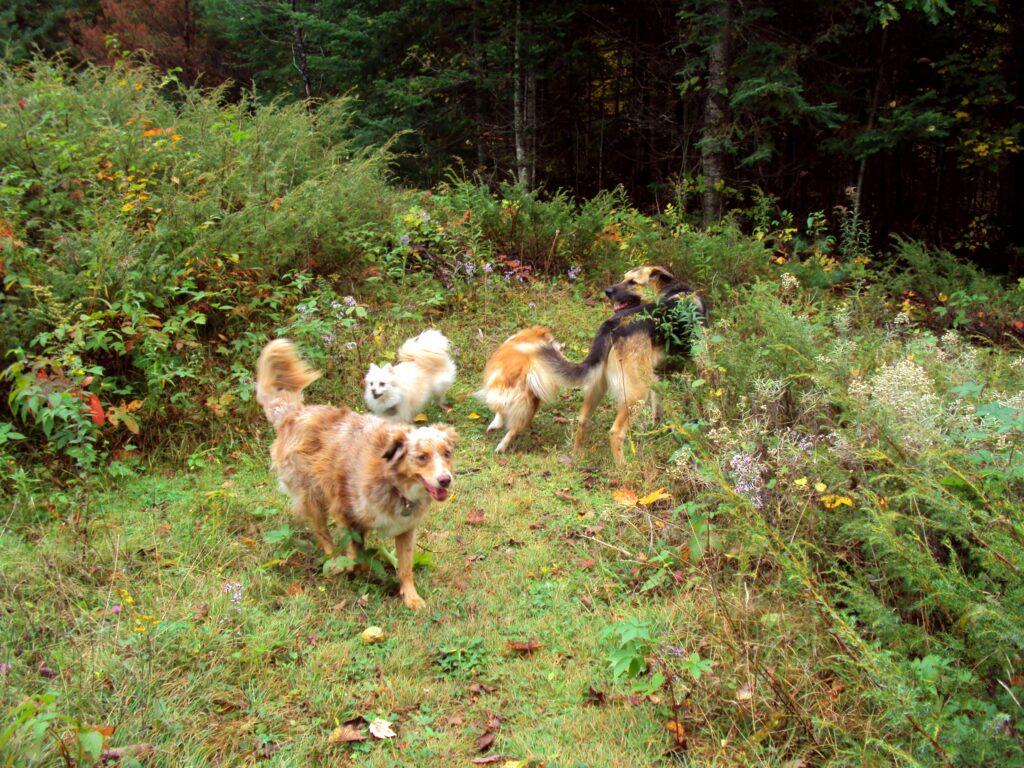 Karen Rosenfeld - About my Blog - Ottawa Valley Dog Whisperer Blog