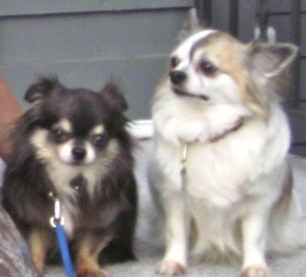 Gizmo and Einstein - Massachusetts, U.S.