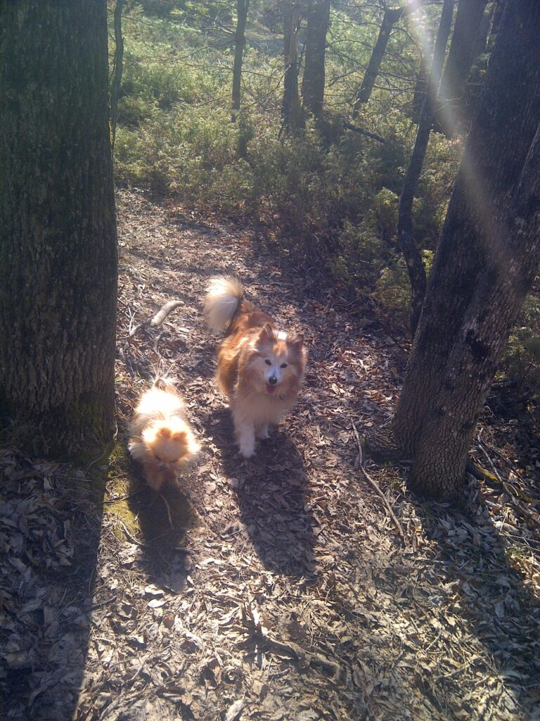 Jacob and Stevie in the woods