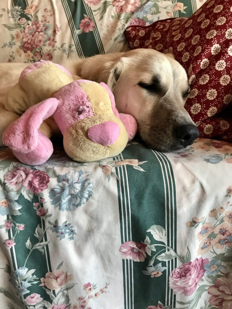 Lily napping with her puppy-dog teddy bear
