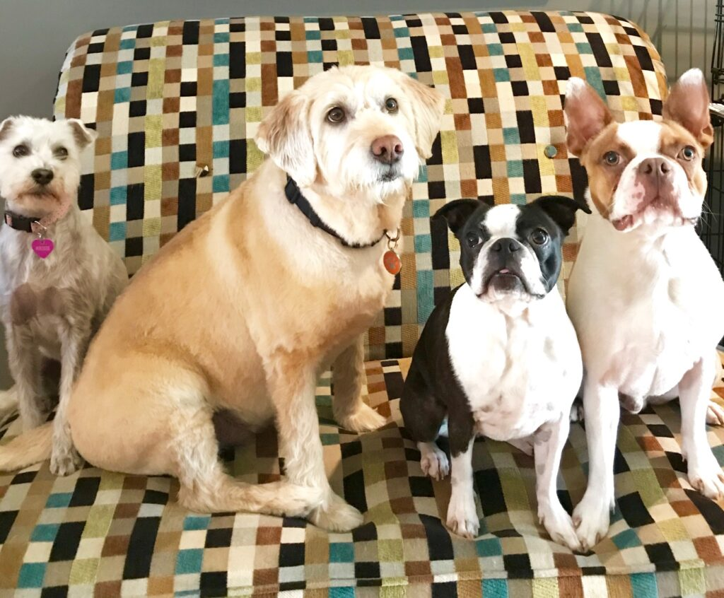 Rosie, Sully, Maine and Trixie - Ontario, Canada