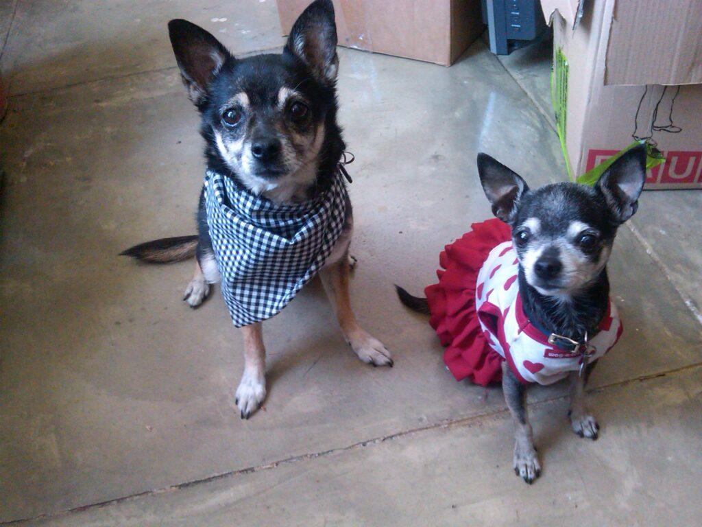 Suki and Lily - Colorado, U.S.