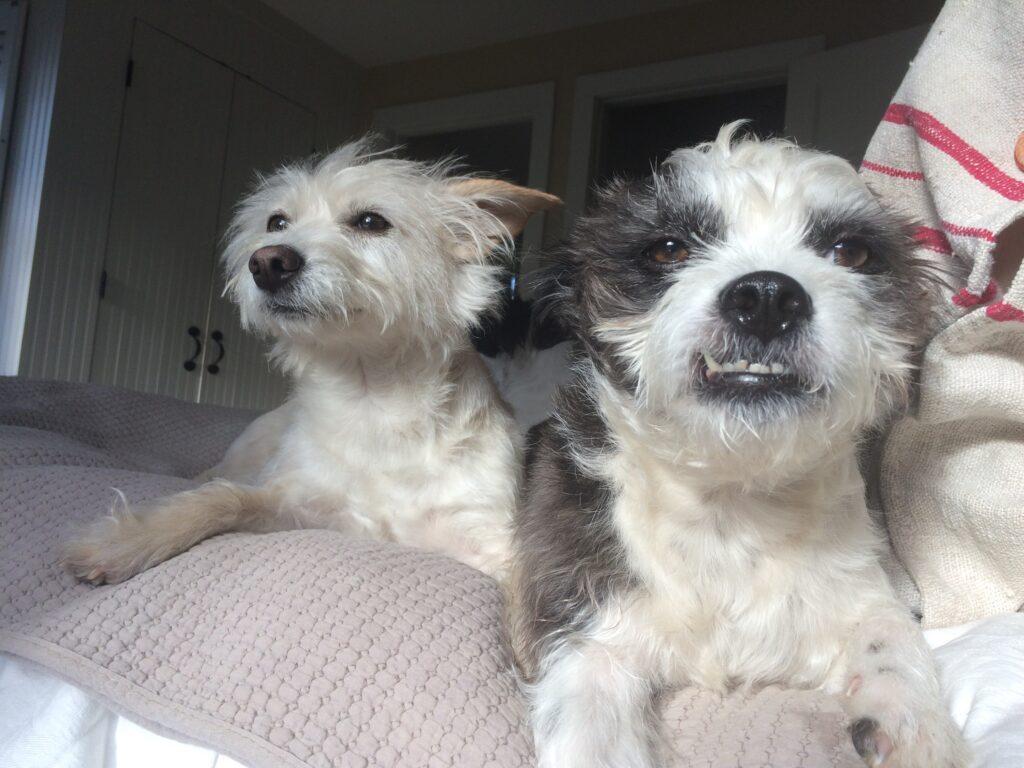 Trixie and Charlie - Pennsylvania, U.S.