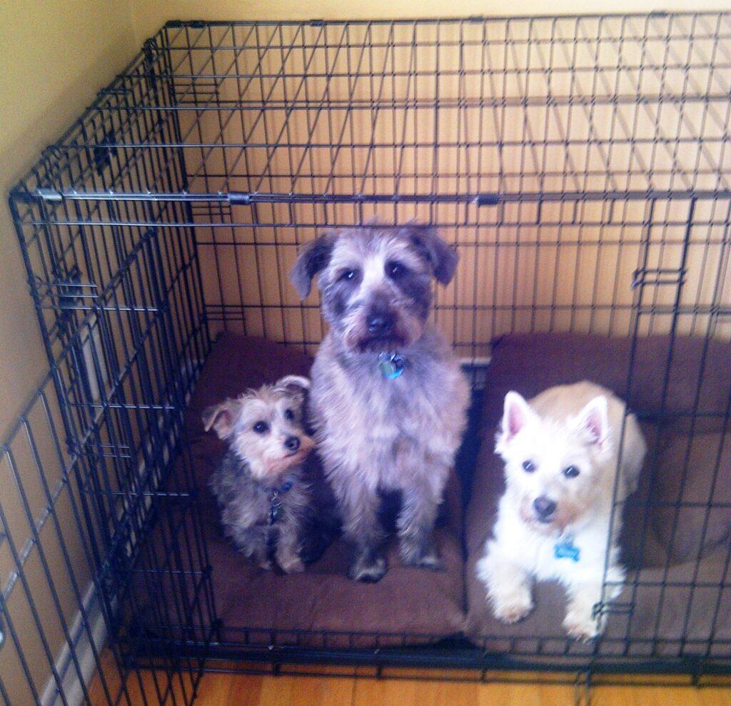 Oscar, Ernie and Freddie - Quebec, Canada