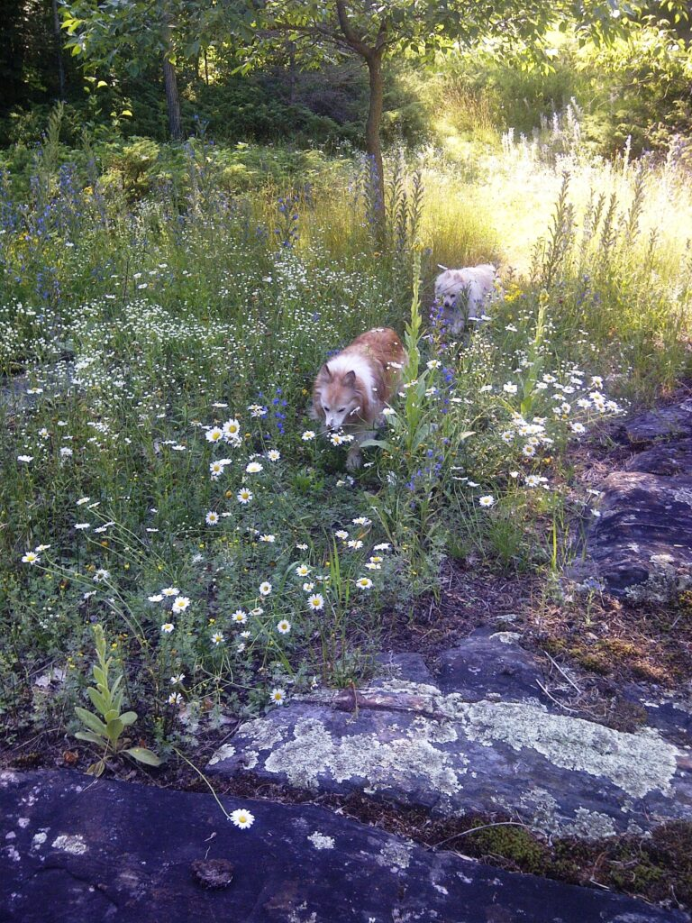 Stevie and Zoey in the wildflowers