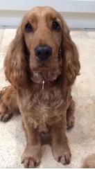 Phoebe - UK