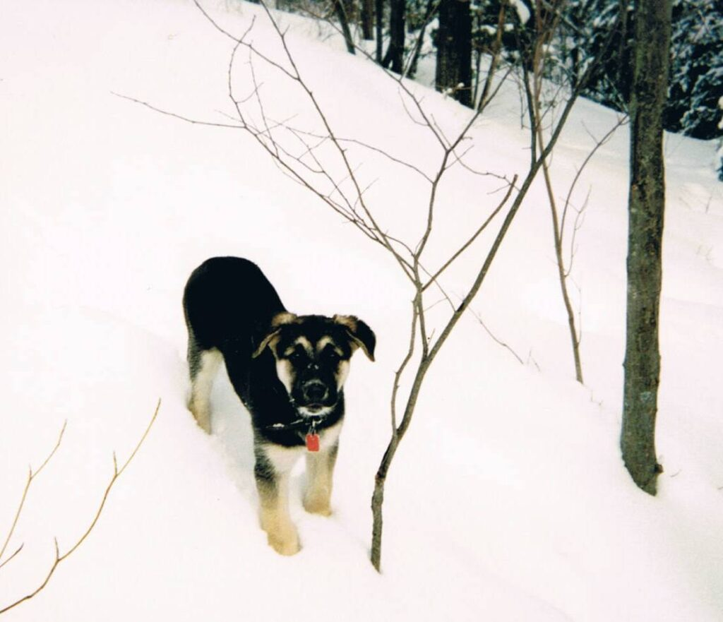 Puppy Shanny
