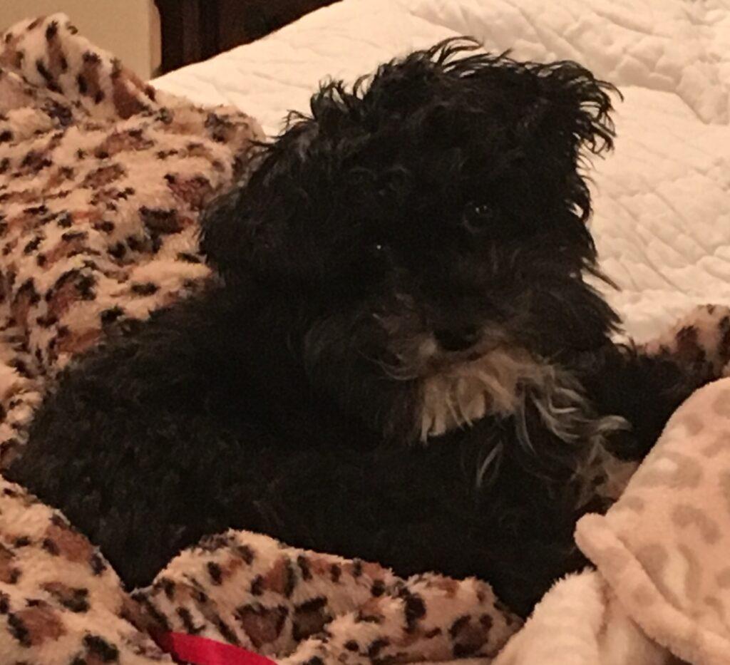 Pup-Pup - Massachusetts, U.S.