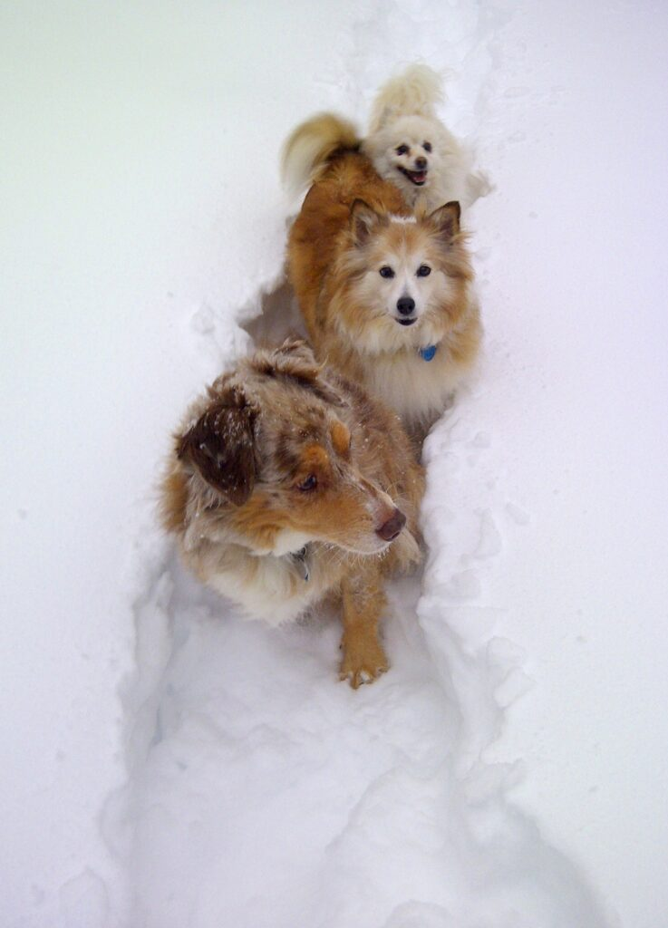 Tasha, Stevie and Zoey making a pathway in the snow