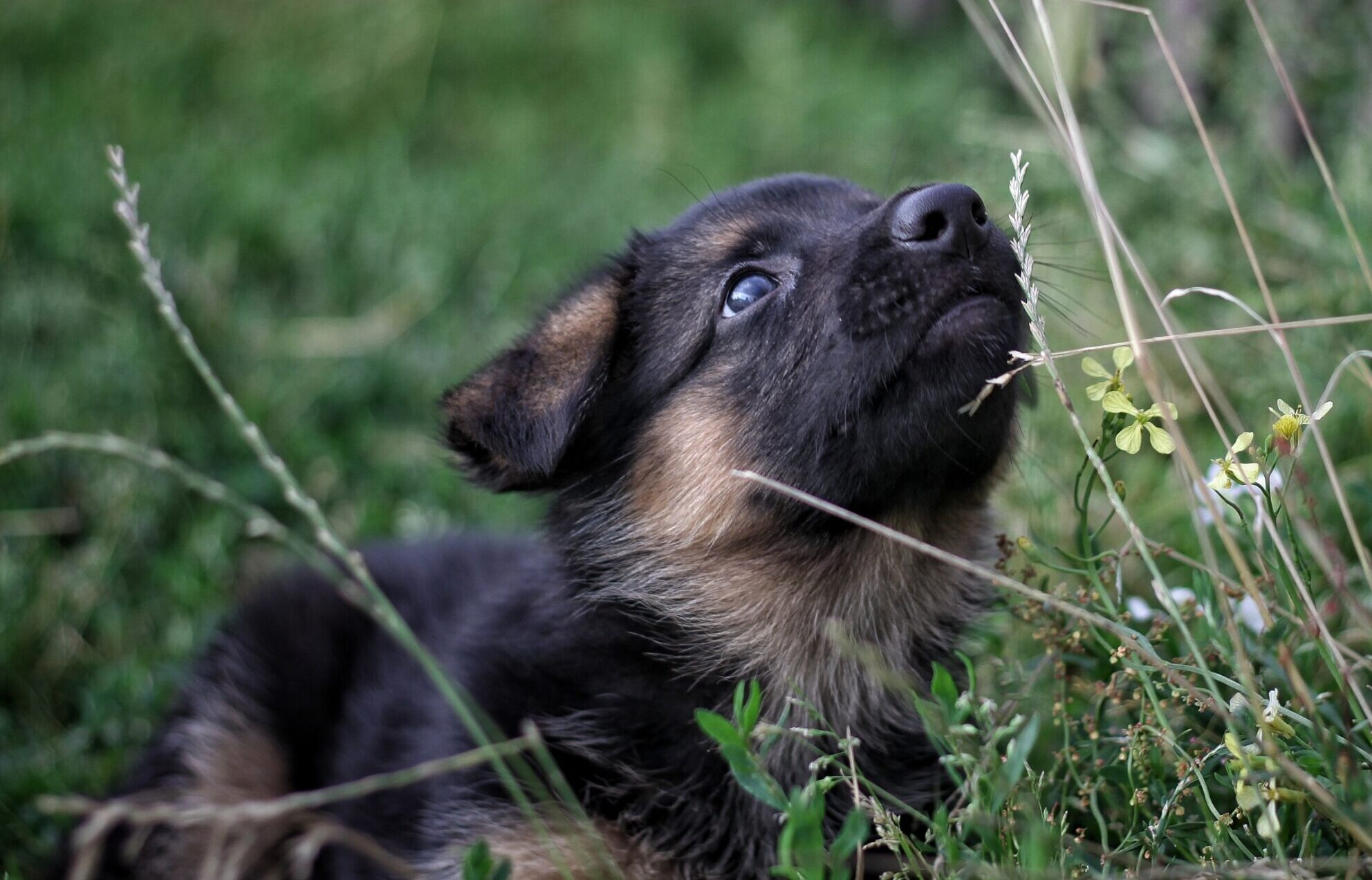 Holistic puppy obedience training sessions