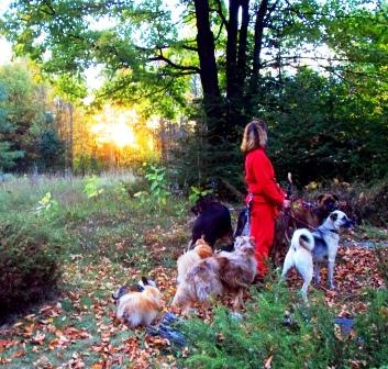 Contact me Karen Rosenfeld, holistic dog behaviorist