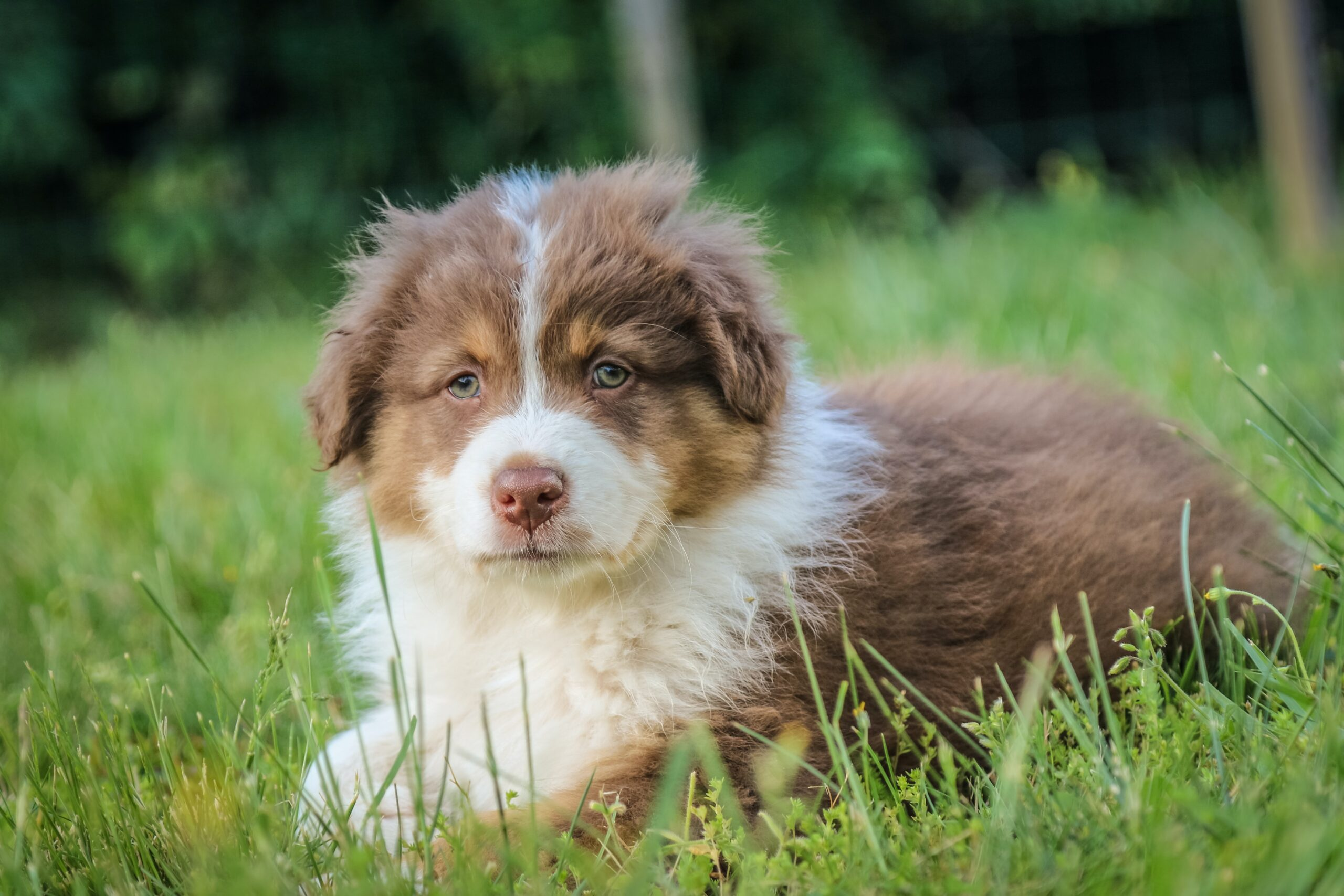 holistic behavioral services for puppies