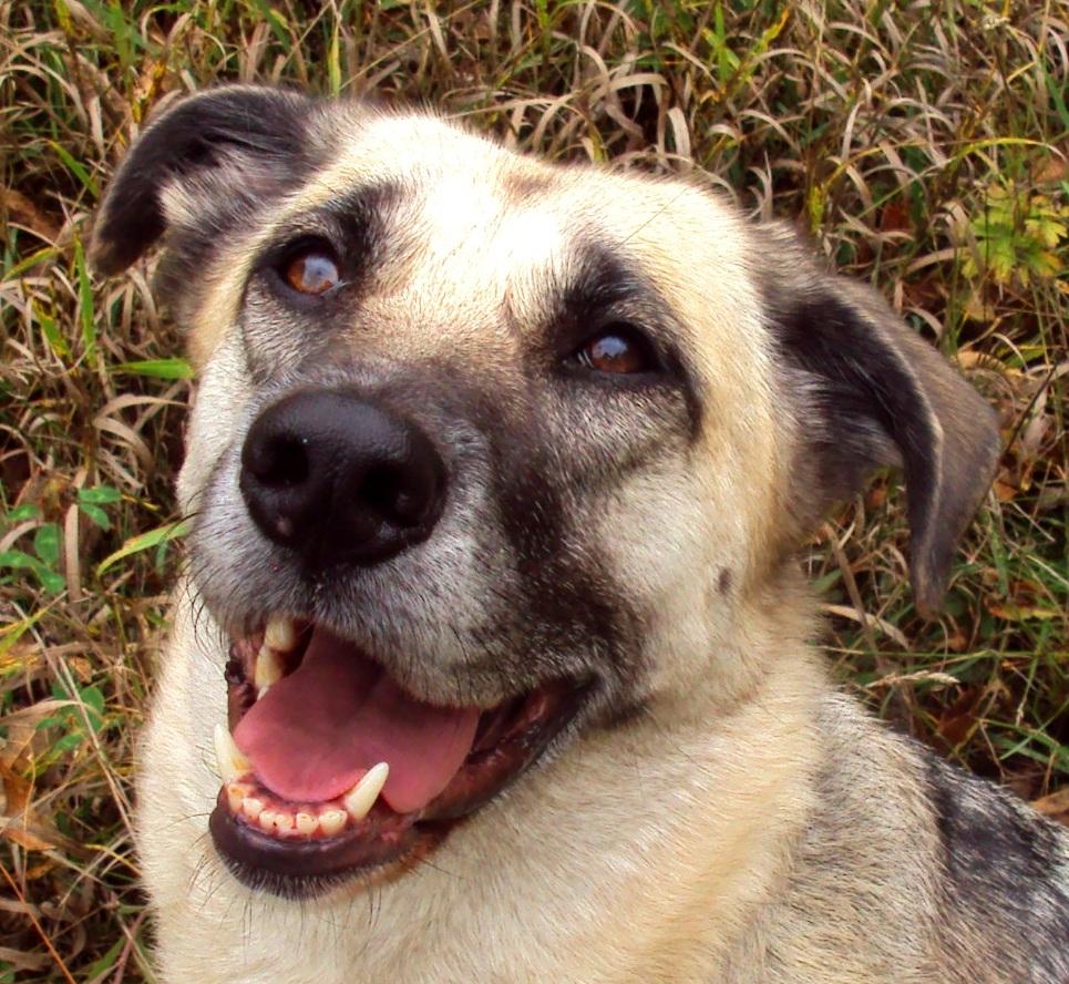 Holistic canine psychological rehabilitation sessions